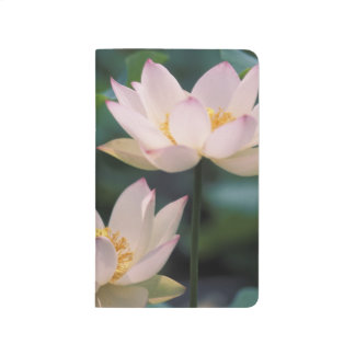 Lotus flower in blossom, China Journal