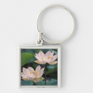 Lotus flower in blossom, China Keychain