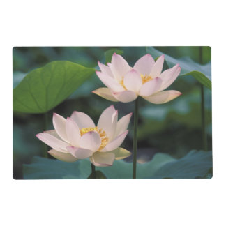 Lotus flower in blossom, China Laminated Placemat