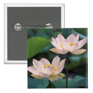 Lotus flower in blossom, China Pinback Buttons