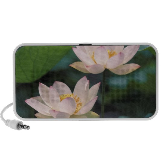 Lotus flower in blossom, China Speaker