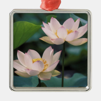 Lotus flower in blossom, China Square Metal Christmas Ornament
