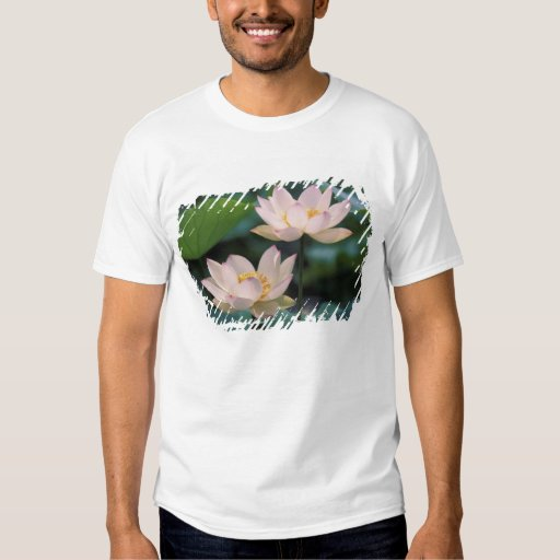 Lotus flower in blossom, China T-Shirt