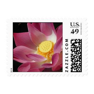 Lotus flower in full bloom postage stamp