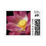 Lotus flower in full bloom stamps