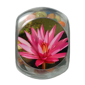Lotus Flower in the Nature Jelly Belly Candy Jars