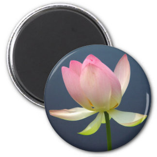 lotus flower refrigerator magnet