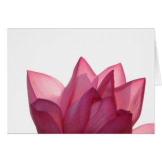 Lotus flower [Nelumbio speciosum] in full Greeting Card
