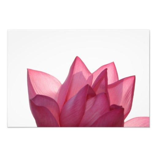 Lotus flower [Nelumbio speciosum] in full Photograph