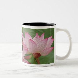 Lotus flower, Nelumbo nucifera, China 2 Two-Tone Coffee Mug