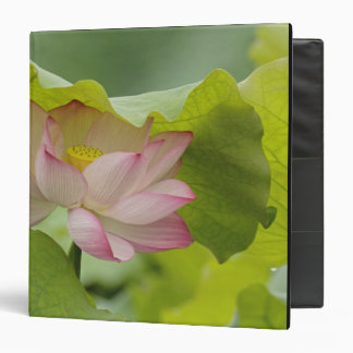 Lotus flower, Nelumbo nucifera, China 3 Ring Binder