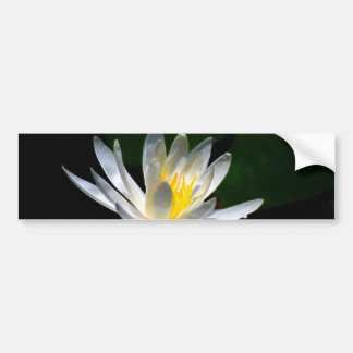 Lotus flower or waterlily and meaning bumper sticker