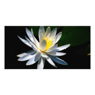 Lotus flower or waterlily and meaning card