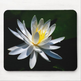 Lotus flower or waterlily and meaning mousepads