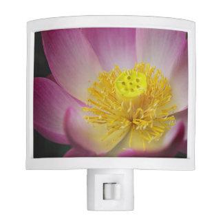 lotus flower petals night light