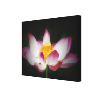 Lotus Flower Photography Great Yoga Om Gift! Canvas Print