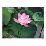 Lotus flower post card