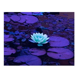 Lotus Flower Purple Blue Turquoise Floral Pond Zen Postcard