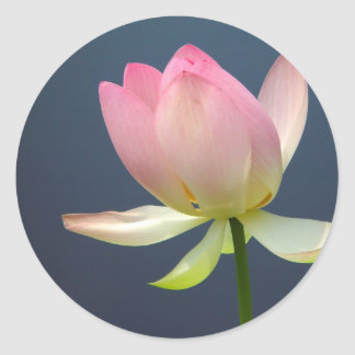 lotus flower stickers