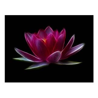 Lotus Flower Water Plant Postcard