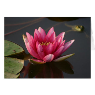 Lotus flower with frog card