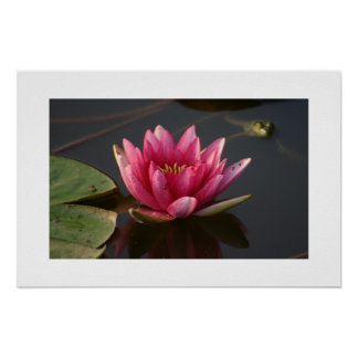 Lotus Flower with Frog Poster