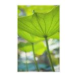 Lotus Gallery Wrap Canvas