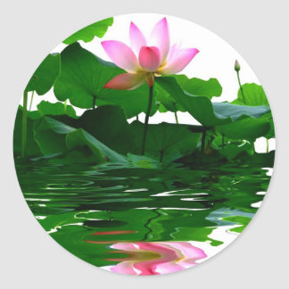 Lotus green water zen tranquility peace beautiful round sticker
