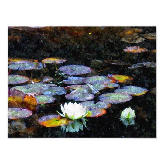 Lotus Hearts Photo Print
