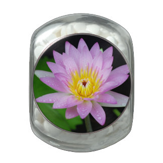 Lotus in India Glass Candy Jar