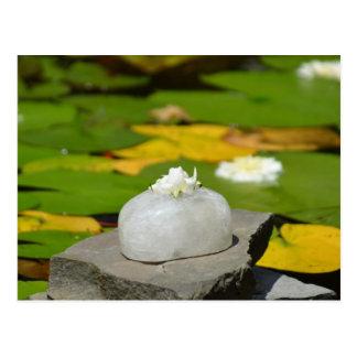 Lotus in Jade Postcard