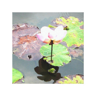 Lotus in Tranquility Canvas Print