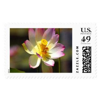 Lotus Large Stamps