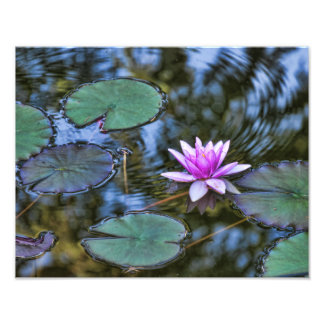 Lotus Lily Pad Water Lily in an Italian Garden Photo Art