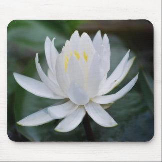 Lotus o waterlily y significado tapetes de ratón