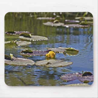 Lotus on water pond mouse pad