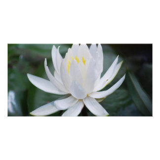 Lotus or waterlily and meaning card