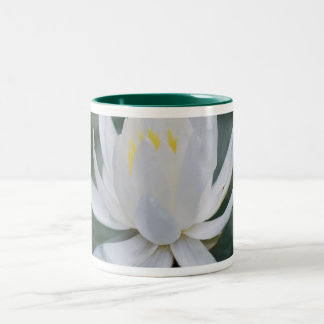 Lotus or waterlily and meaning coffee mugs
