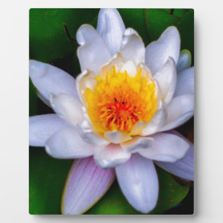 lotus plaque