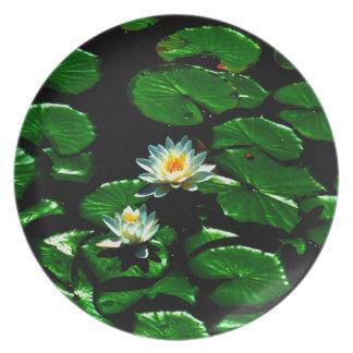 Lotus Plato