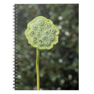 Lotus Pod Notebook. Notebook