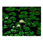Lotus Post Card