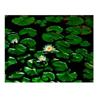 Lotus Postal