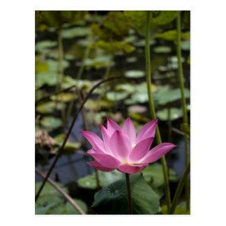 Lotus Postales
