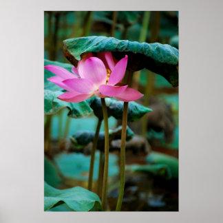 ...lotus poster
