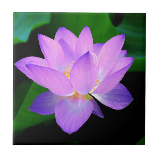 Lotus púrpura azul teja  ceramica