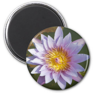 Lotus púrpura/lirio de agua imán redondo 5 cm