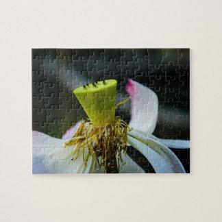 Lotus - puzzles
