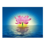 Lotus Reflection Post Card