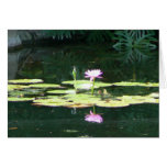 Lotus Reflections Cards